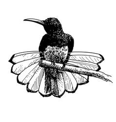 Bird doodle hand drawn vector