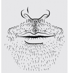 beard man vector image