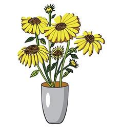 sunflower in vase on white vector image