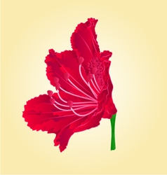 Red flower isolated rhododendron vector