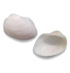 Seashells vector
