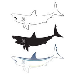 white shark vector image