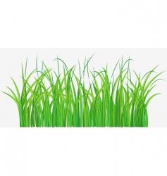 grassy field vector image