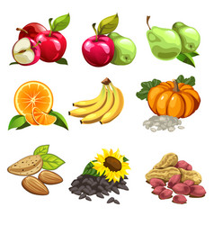 fruits vegetables nuts sunflowers seeds vector image vector image