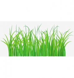 grassy field vector image vector image