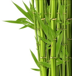Green bamboo stems with leaves - grove vector image vector image
