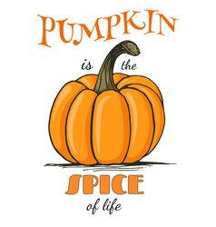 Pumpkin is the spice of life lettering vector