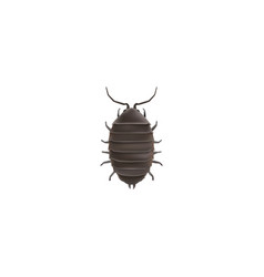 realistic bug element of vector image