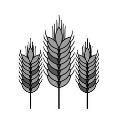 Isolated wheat ear design vector