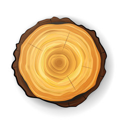 Cross section tree wooden stump tree round vector