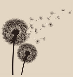 nature background with flower dandelion vector image