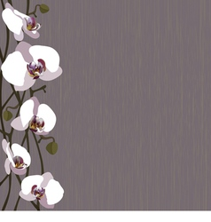 Purple background with white orchid flowers vector image vector image