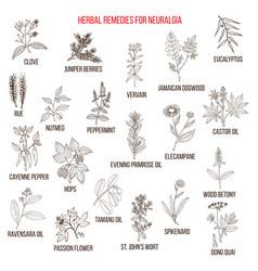 best herbal remedies for neuralgia vector image vector image