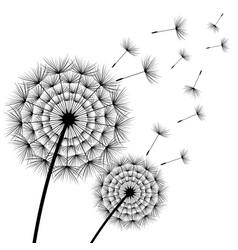 two beautiful black flower dandelion vector image