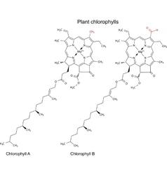 Plant pigments chlorophylls vector