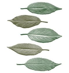 Vintage cherry leaf set vector image vector image