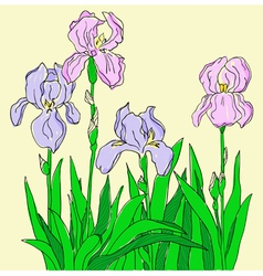 Color iris hand drawing vector