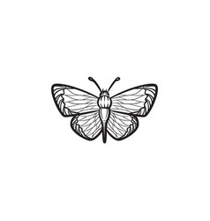 butterfly hand drawn sketch icon vector image