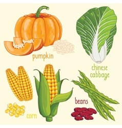 Vegetable mix vector image