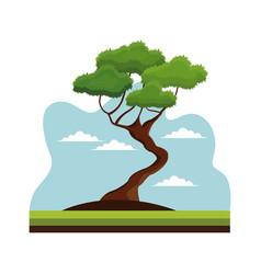 Bonsai tree nature decoration landscape vector
