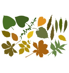 Color silhouettes of leafs vector