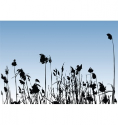 reeds vector image