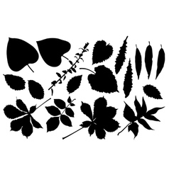 Black silhouette of leafs vector