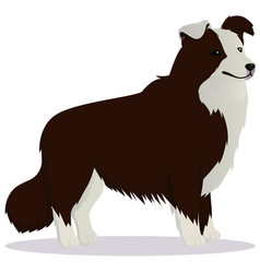 Border collie dog brown vector