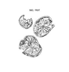 bael fruit sketch line art hand drawn vector image