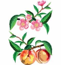 Peach vector