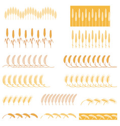 strips ears of cereals plants vector image