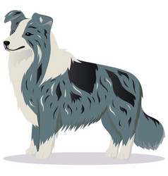 border collie dog marble vector image vector image