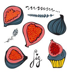 Colorful set of hand drawn figs vector