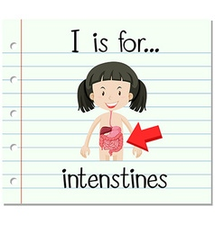 Flashcard letter i is for intenstines vector