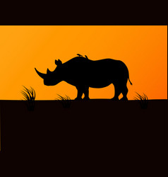 black rhino silhouette background sunset vector image