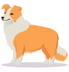 Border collie dog red vector