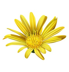 A yellow sunflower vector image vector image