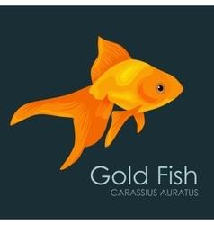 Aquarium fish Gold Fish vector image vector image