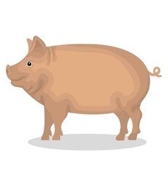 Pig animal farm icon vector