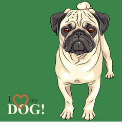 Dog serious fawn pug breed vector