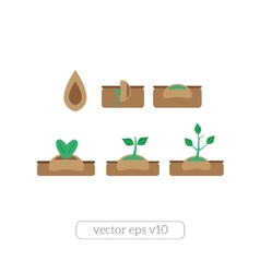 Young plant life process icons set vector