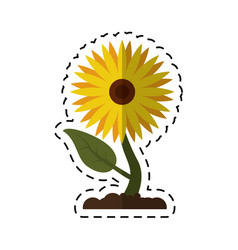 cartoon sunflower flora leaves icon vector image