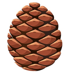 Close up of pine cone vector image vector image