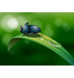 A green leaf with a beetle vector