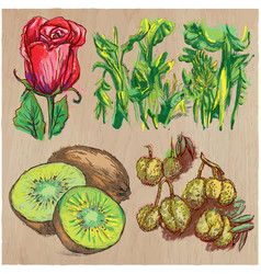 Flowers - an hand drawn colored pack line art vector