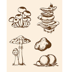 vintage hand drawn forest mushrooms vector image