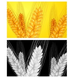 ear wheat background vector image