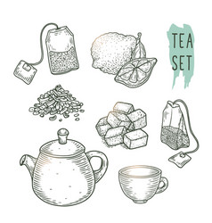 Sketch of tea elements include teapot teabags vector