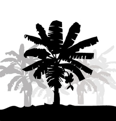 Banana tree silhouette vector