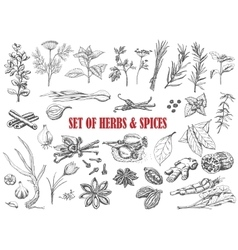 Set of herbs and spices in sketch style vector